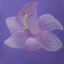 Pastellmalerei, Orchidee, Blüte, Blumen