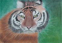 Tiger, Pastellmalerei, Kreide, Zeichnungen