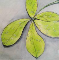 Blätter, Grün, Tropfen, Tau