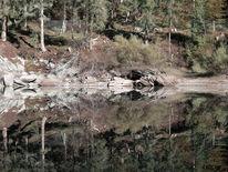 Wasser, Spiegel, Wald, See