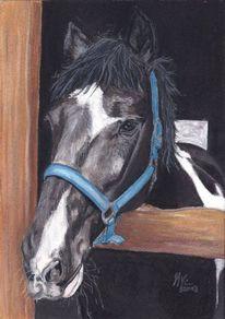 Pferde, Pastellmalerei, Portrait, Pferdezeichnung
