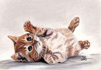 Katzenportrait, Mareln kiebeler, Katze, Zeichnung