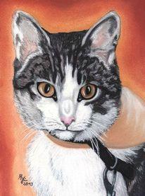 Augen, Portrait, Pastellmalerei, Katze