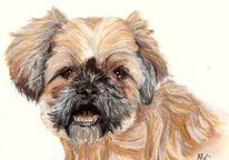 Hundezeichnung, Zeichnung, Hund, Haflinger