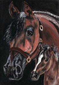 Pferde, Pastellmalerei, Zeichnung, Portraitzeichnung