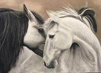 Pferde liebe, Pferde, Pferdeportrait, Zeichnungen