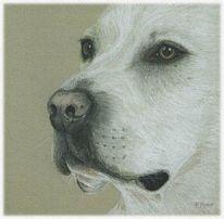 Hund, Hundeportrait, Labrador, Malerei