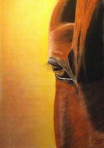 Pferde, Zeichnungen
