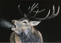 Hirsch, Wildtiere, Jagd, Röhrender hirsch