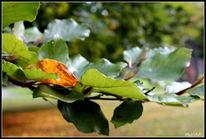 Park, Baum, Blätter, Fotografie