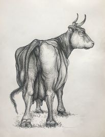 Gesäß, Kuh, Kurvig, Zeichnungen