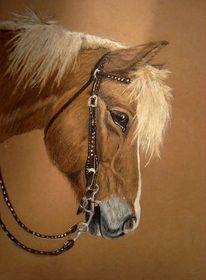 Pastellen, Castell, Pferde, Faber