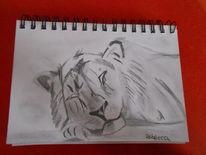 Zeichnungen, Löwe