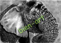 Gemälde, Elefant, Wohnung, Tiere