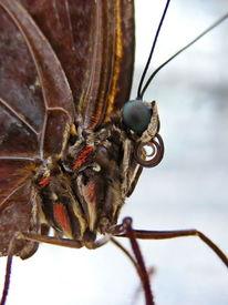 Schmetterling, Makro, Inekt, Natur