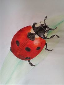Punkt, Blätter, Natur, Insekten