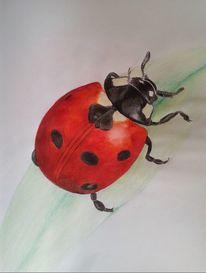 Tiere, Insekten, Grün, Käfer