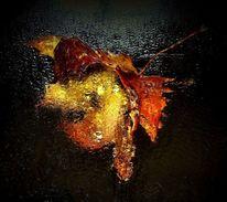 Ahornblatt, Herbst, Orange, Pflanzen