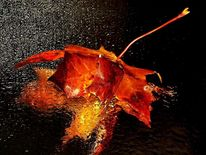 Blätter, Wasser, Herbst, Orange
