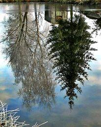 Spiegelung, Winter, Weiß, Baum