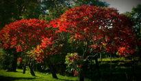 Herbst, Baum, Rot, Fotografie