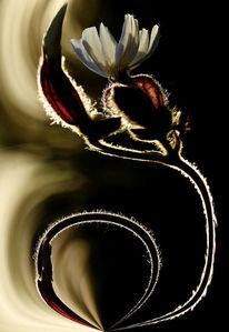 Blumen, Gegenlicht, Digitale kunst