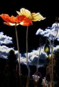Nacht, Blumen, Wolken, Fotografie
