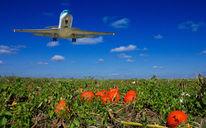Flugzeug, Kürbisse, Fotografie
