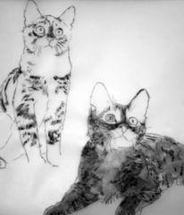Ekkatze, Europäische kurzhaar, Katze, Illustrationen