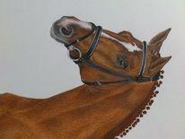 Zeichnungen, Pferde, Hengst