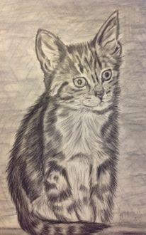 Oma, Katzenzeichnung, Bleistiftzeichnung, Zeichnung