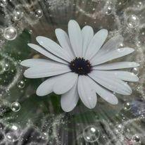 Blumen, Weiß, Digitale kunst