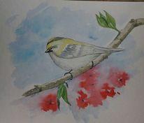 Vogel, Zweig, Aquarellmalerei, Sommergoldhähnchen