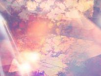 Monochrom, Treppe, Farben, Rose