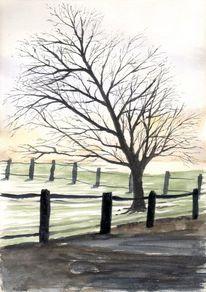 Baum, Landschaft, Himmel, Koppel