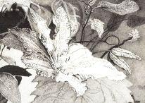 Tusche, Blätter, Zeichnung, Blüte