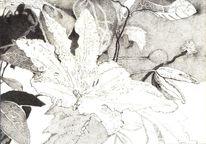 Blüte, Zeichnung, Tusche, Natur