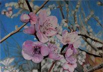 Blüte, Zeichnung, Äste, Kirsche
