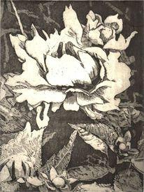Blumen, Knospe, Druckgrafik, Schwarz weiß