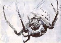 Spinne, Krabbeln, Netz, Tiere