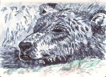 Bär, Müde, Kralle, Schlaf