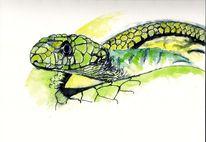 Haut, Tiere, Schlange, Natur