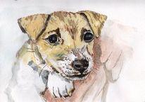Pfote, Hund, Augen, Schnauze