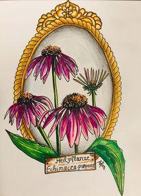 Blumen, Heilpflanze, Echinacea, Ccopicmarker