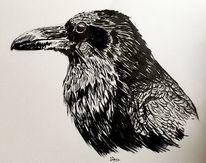 Vogel, Rabe, Tiere, Tuschmalerei