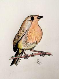 Rotkehlchen, Tiere, Vogel, Zeichnungen