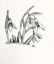 Fineline, Tuschmalerei, Schneeglöckchen, Zeichnungen