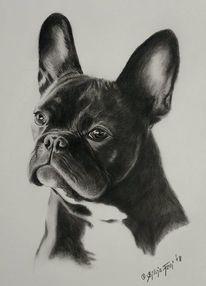 Tierzeichnung, Französische bulldogge, Hund, Hundeportrait