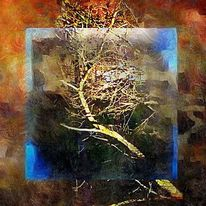 Stimmung, Baum, Natur, Fotografie