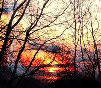 Abbild, Baum, Fotografie, Himmel